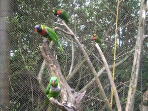 zoo-trip-8-8-09-031 birds