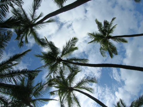 palms and clouds hawaii 09