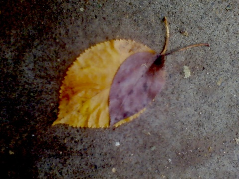 two leaves pretending to be a snail