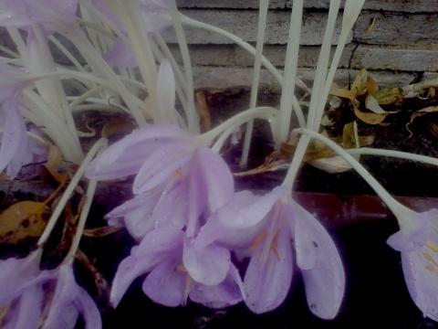 ghost stemmed flowers