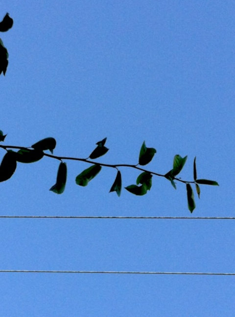leaves and wires