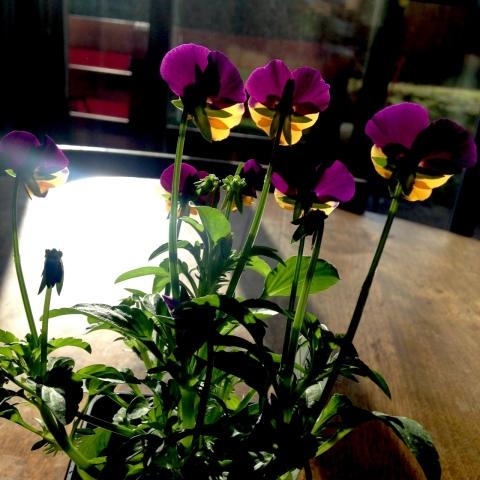 oona-blooms