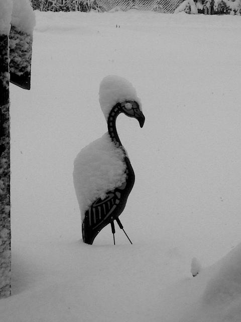 snowmingo